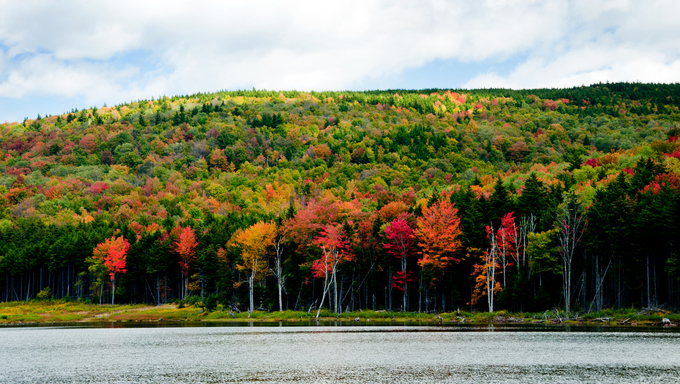 Trees are changing colors along Shaver's Lake.