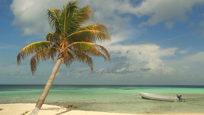 A palm tree and the ocean at Goff's Caye in Belize.