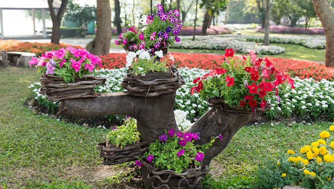 colorful flower garden background in the morning