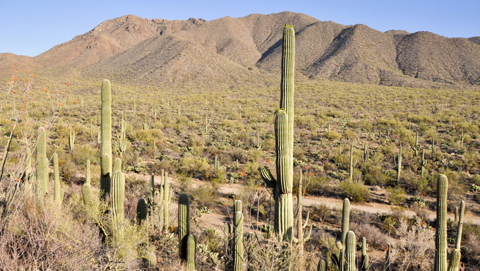 Saguaro National Park, Tucson, Arizona.