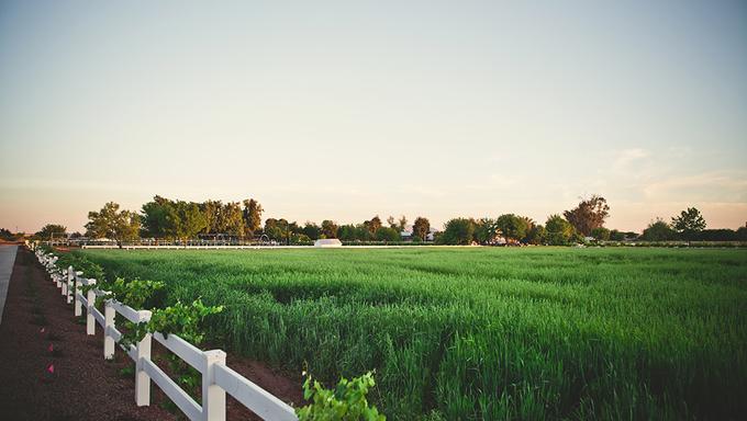 Some Arizona farmland located near Gilbert.