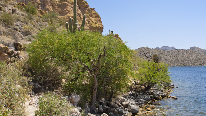 Saguaro Lake, located within the Tonto National Forest just minutes from Mesa.