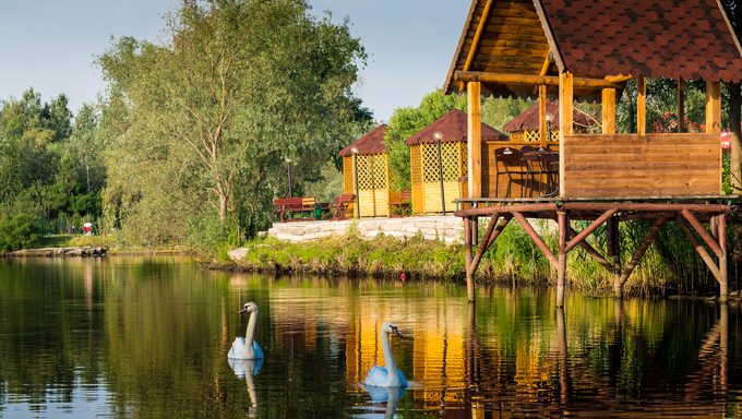 Swans on a lake in the Ukraine.