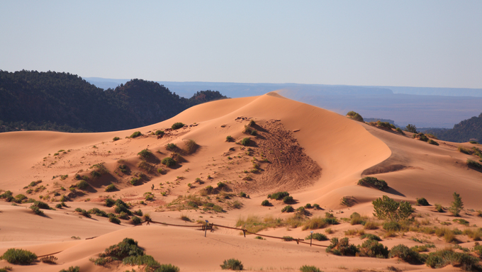 Reserve Coral Pink sand dunes in the U.S.. Elegant orange-pink dune spectacularly illuminated by sunrise