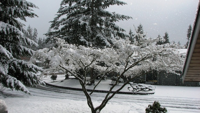 Snowfall in southern Everett, Washington.