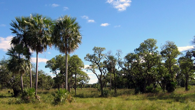 A viow of Chaco Boreal near Asuncion, displaying some of the landscape of Paraguay.