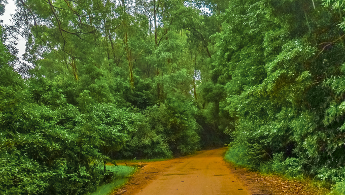 Nature landscape with earth road and leafy nature located in the famous Lussich Arboretum near Punta del Este.