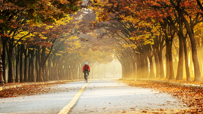 A cyclist in Incheon Grand Park, biking through the Fall colors.