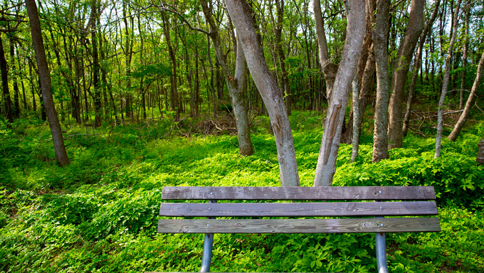 Lonely weathered bench at the jungle forest park outdoor in Texas