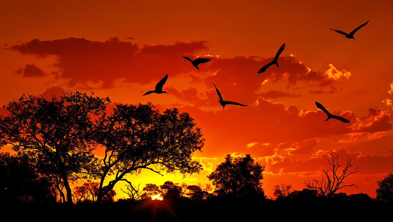 Landscape of Africa with warm sunset, beautiful nature, dramatic red sky, silhouettes of big Ibis birds, wildlife safari, Eco travel and tourism, South Africa, Kruger national park, Sabi Sand
