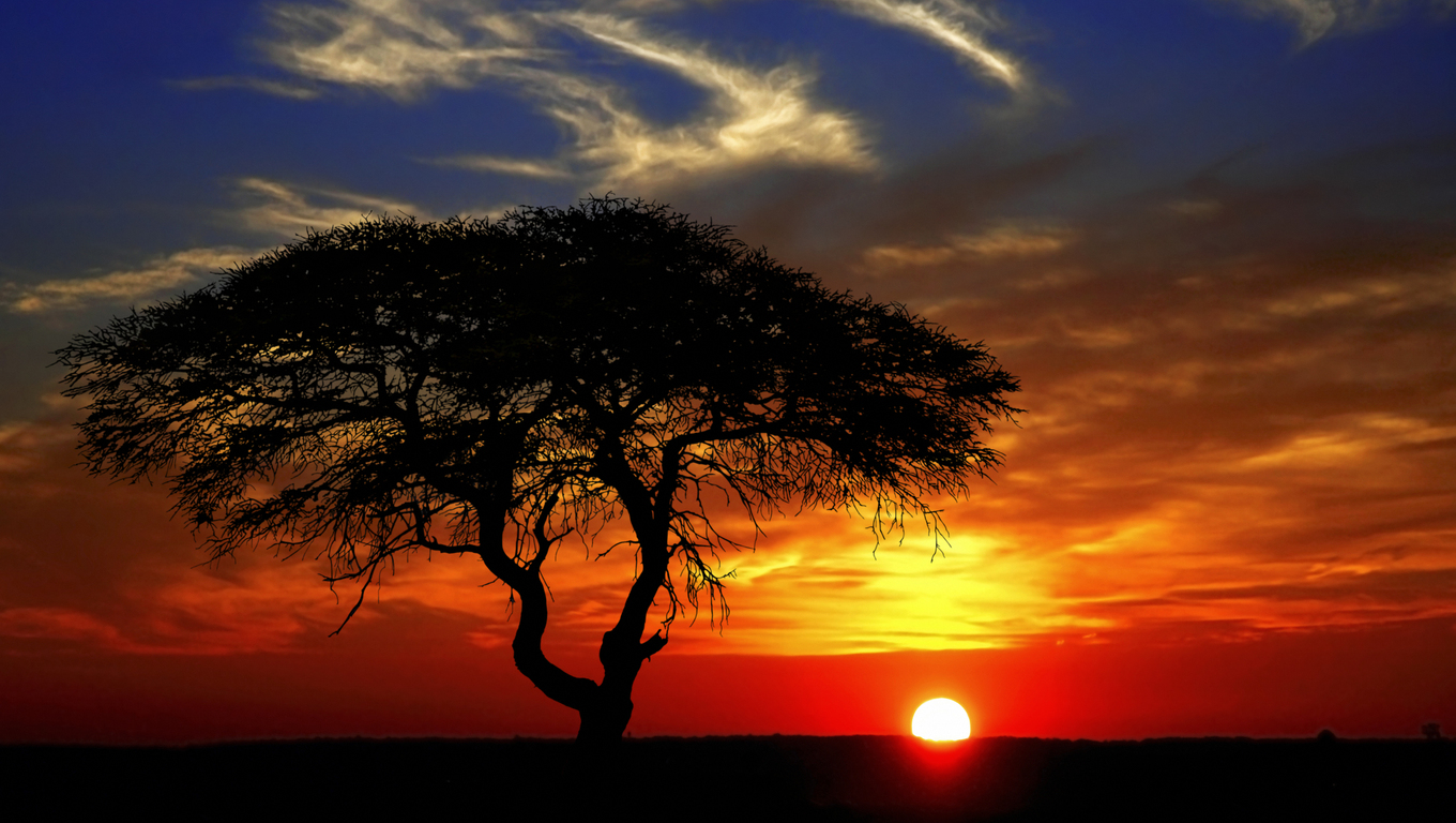Beautiful african sunset with silhouetted acacia tree (Namibia)