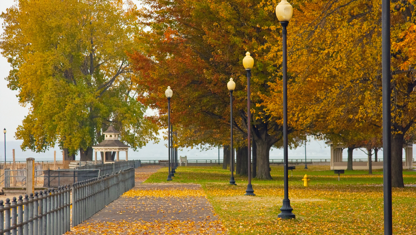Promenade and sidewalk trees in Rochester.